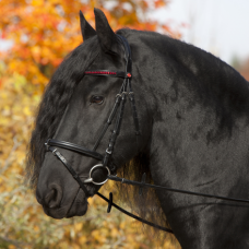 Bridle ANJA BERAN Exclusive