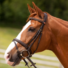 Bridle ELITE
