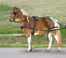 Single Harness, synthetic