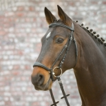 Bridle HANNOVER