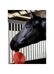 Rubber Play Ball for Horse