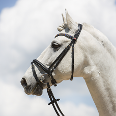 Bridle Ultrasoft® Fashion