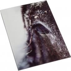 3D Postcard Impression