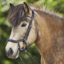 Anatomic Icelandic Bridle