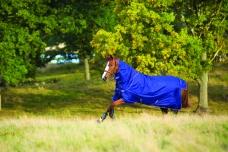 Amigo® Hero 6 Plus Pony Medium