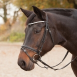 Bridle Silverlight