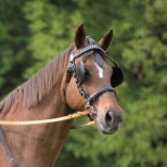 Bridle with Blinkers