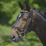 Bridle CLINCHER
