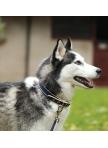 Dog Collar Amigo