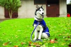 The AMIGO® Dog Rug