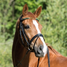 Bridle Magic Tack Two Rowed