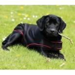 Rambo® Ionic® Dog Rug