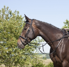 Elastic hunting breast plate with martingale fork