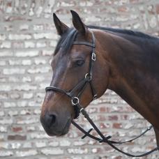 WALDHAUSEN autumn/winter 2019/2020 > HORSE