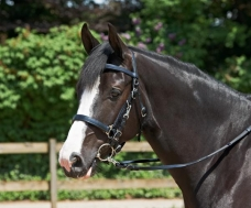 Hacking Bridle EASY