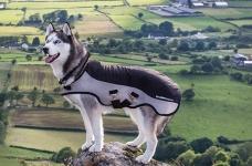 Rambo® Sport Series Dog Rug